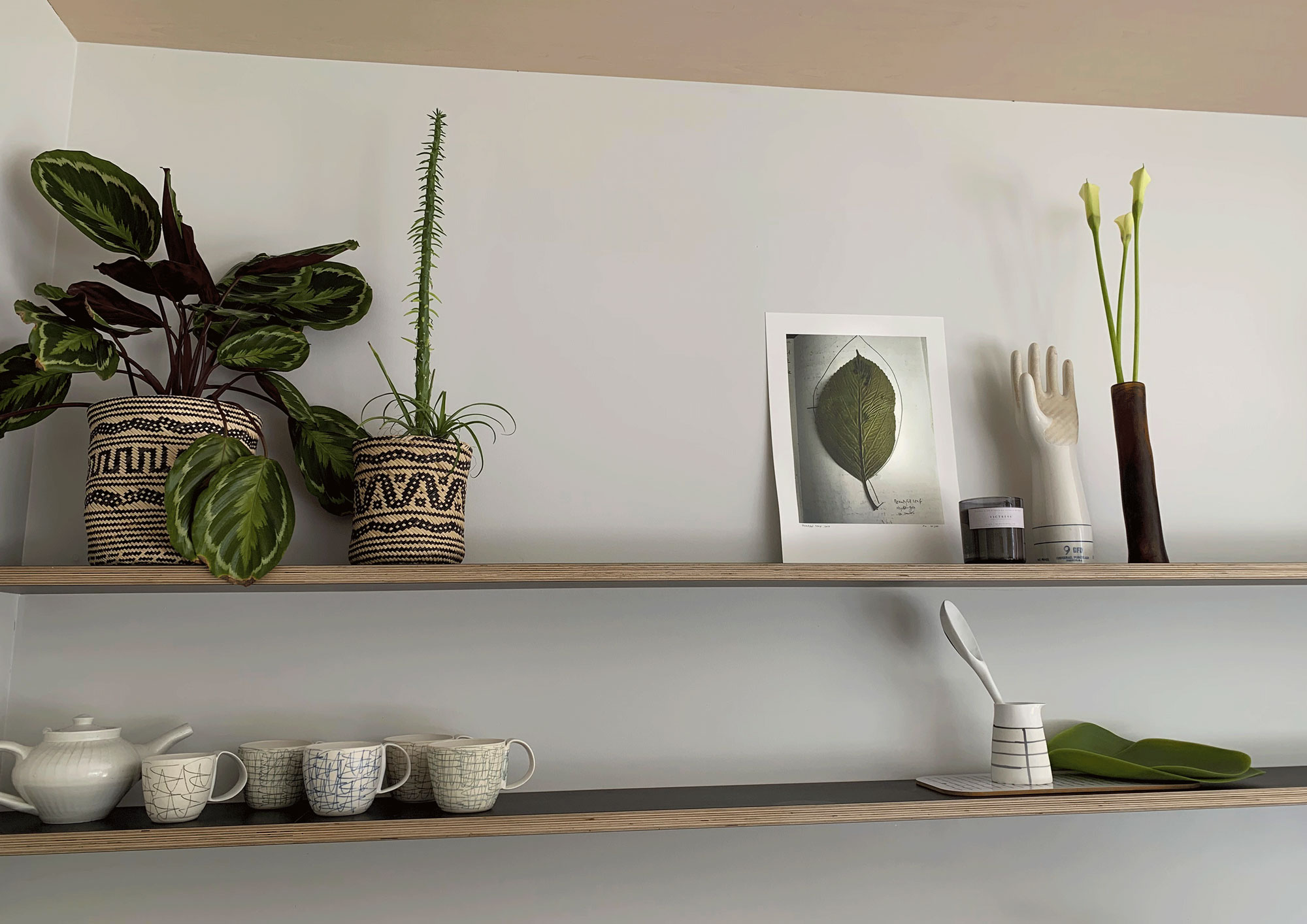 A small version of  Beautiful hydrangea, 2017  sitting pretty on the gorgeous shelves of Carolyn's kitchen