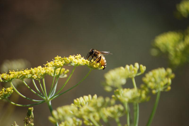 Honey Bee, Portland, OR