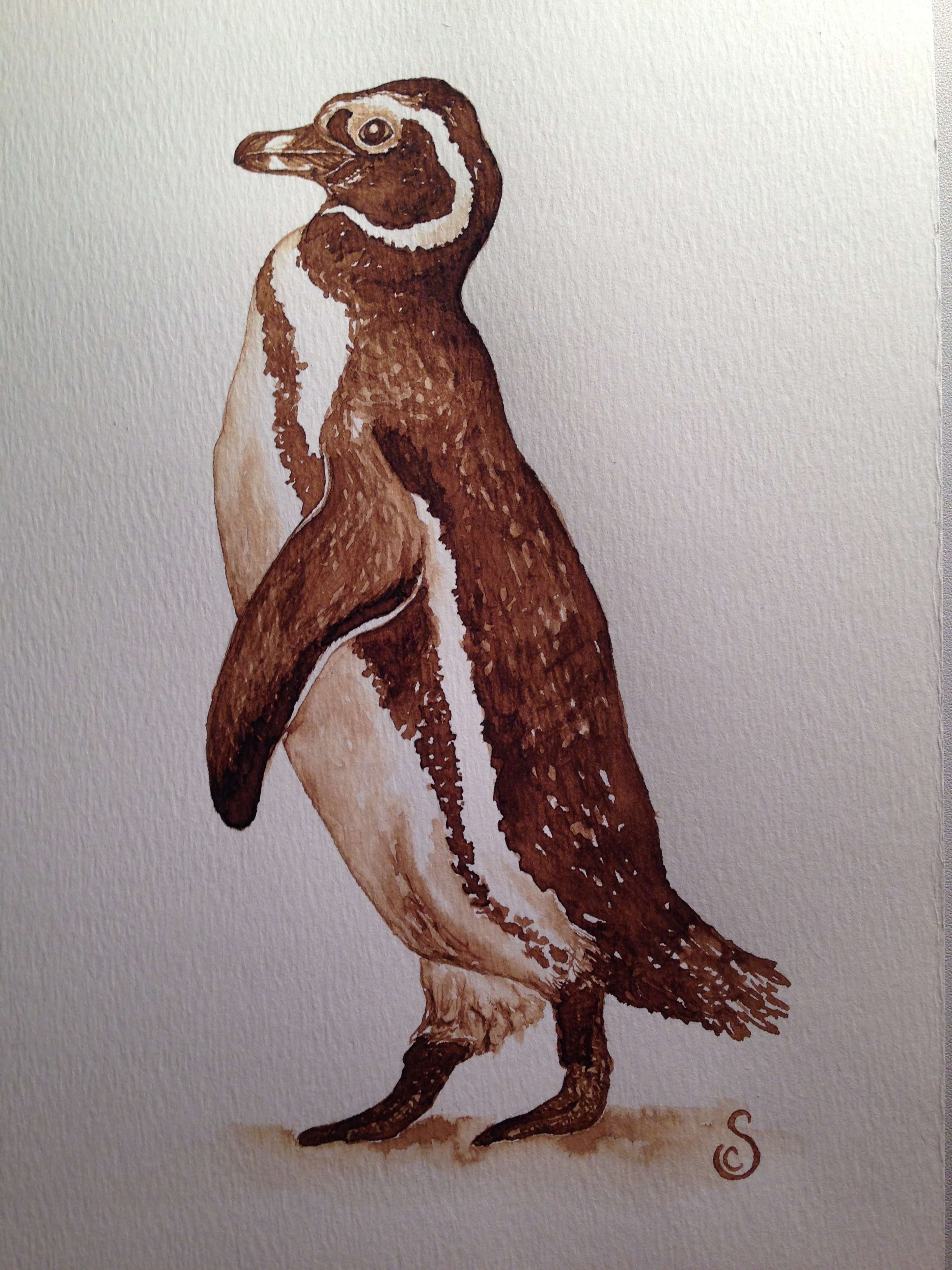 Magellanic Penguin, Walnut Ink on Paper