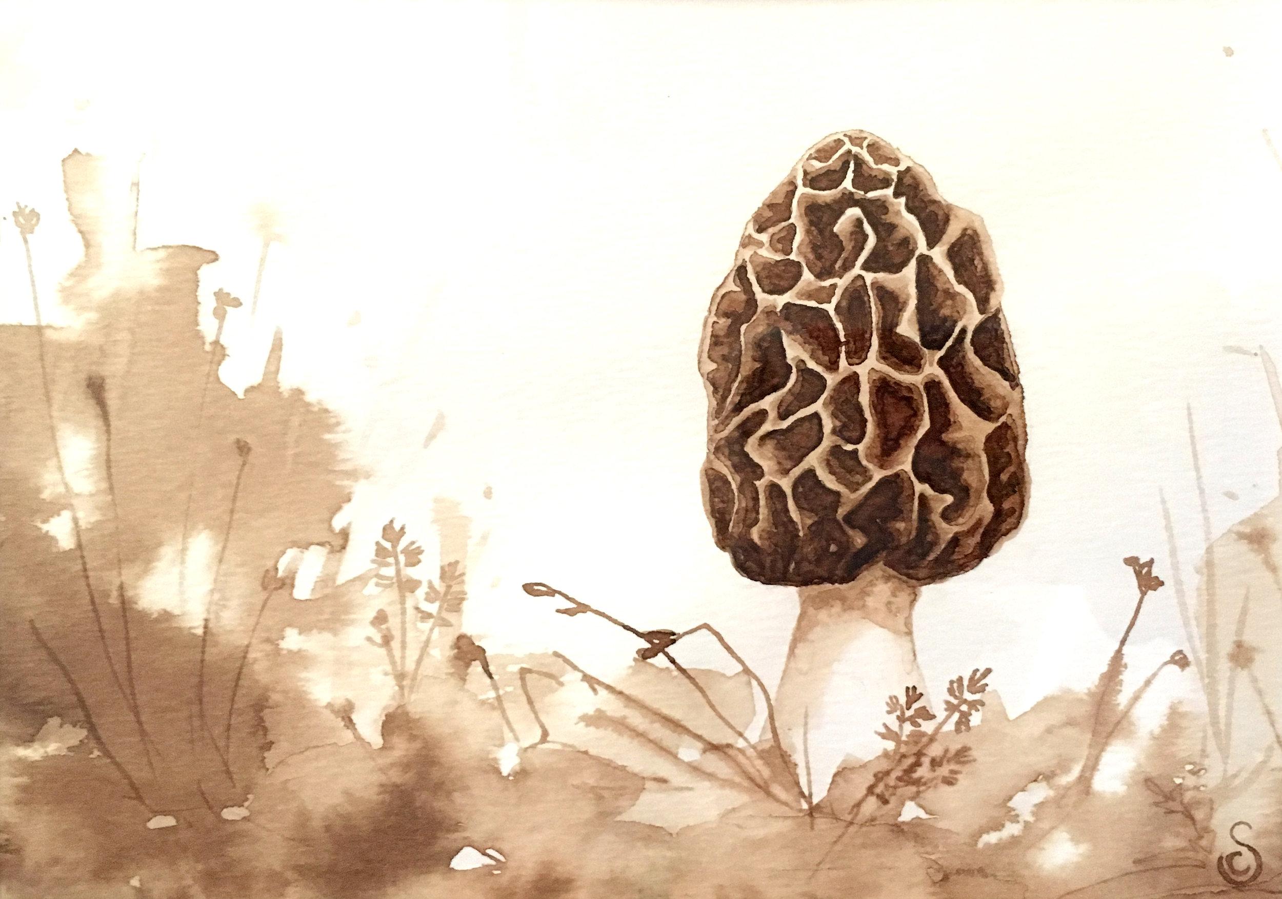 Morel Mushroom, Walnut Ink on Paper