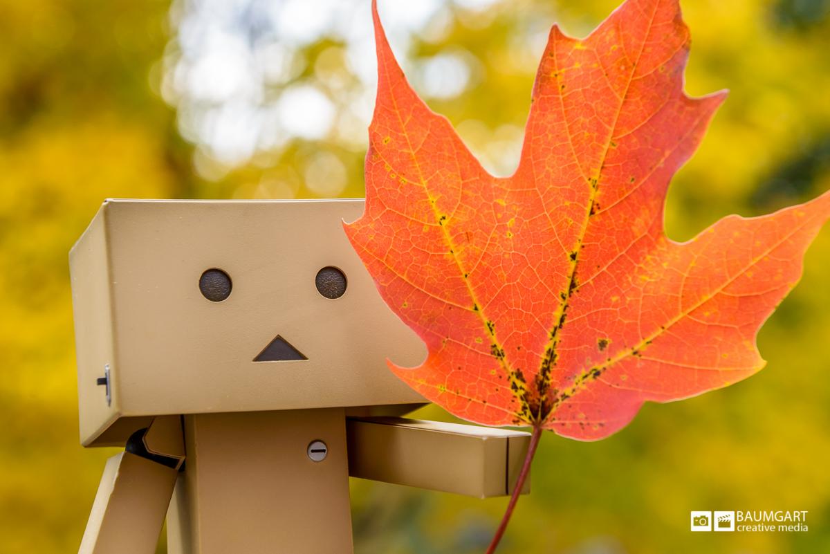 Danboard enjoying the New England fall foliage by Jeff Baumgart Creative Media