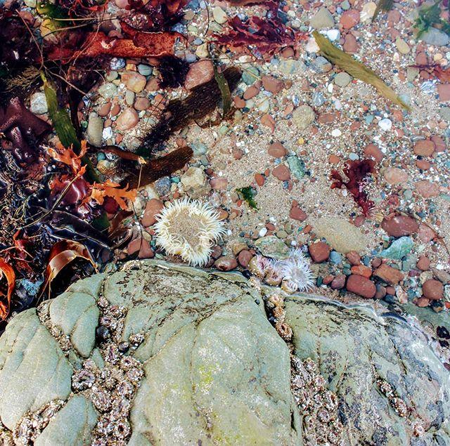 The beauty of nature . . . . #seaweedharvesting  #wildcalifornia  #marinelifehabitats  #seaweed #amaphotog  #sealife  #pharmersea  #seaweedfarming