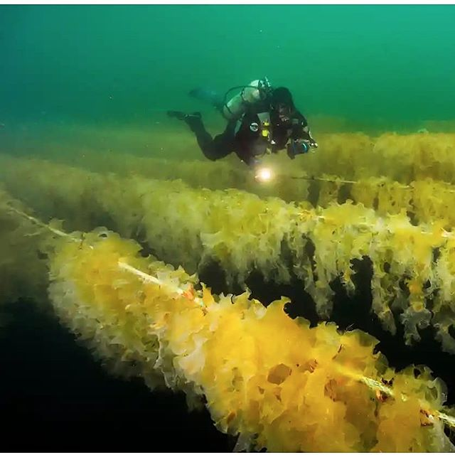 Repost from the Guardian . . . . #aquaculture  #seaweedcultivation  #blueeconomy  #seaweed #americanseaweedculture  #Greenwave #pharmersea  #californiaseafarm  #climatechange  #climatesolutions  #AMAseabeauty  #ecofocused