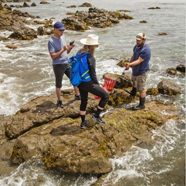 New article    link in profile! . Read about the seaweed industry in California @newtimesslo. . #seaweedfarming #aquaculture #seathenews #pharmersea #californiaseafarm #seadan  #amakelpqueen #newtimesslo  #americangrownseavegis #californiakelp  #marineingredients  #thalassotherapy  #amaseabeautypartner  #goletakelpfarm #harcestingthesea #eaturkelp #chefsofinstagram