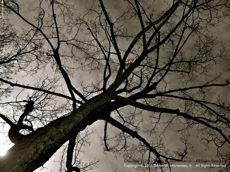 PICT3603-WM.jpg
