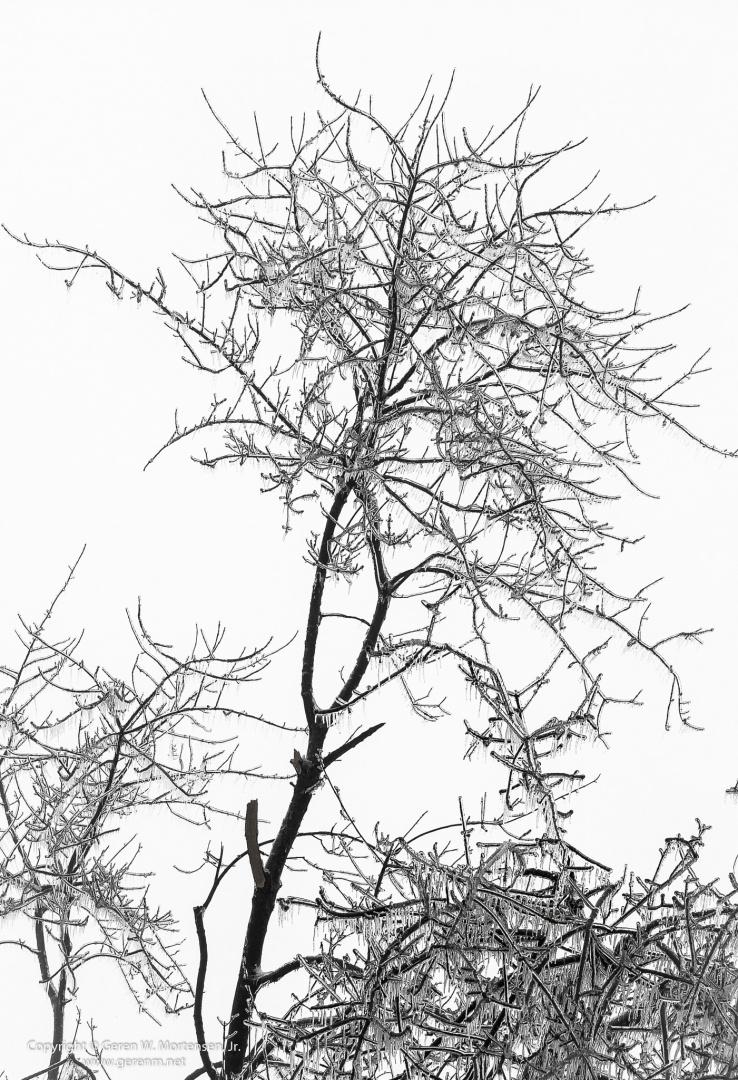 20140205-_DSF1393.jpg