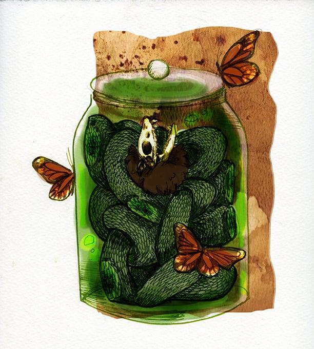 Pilosus Collum serpentis