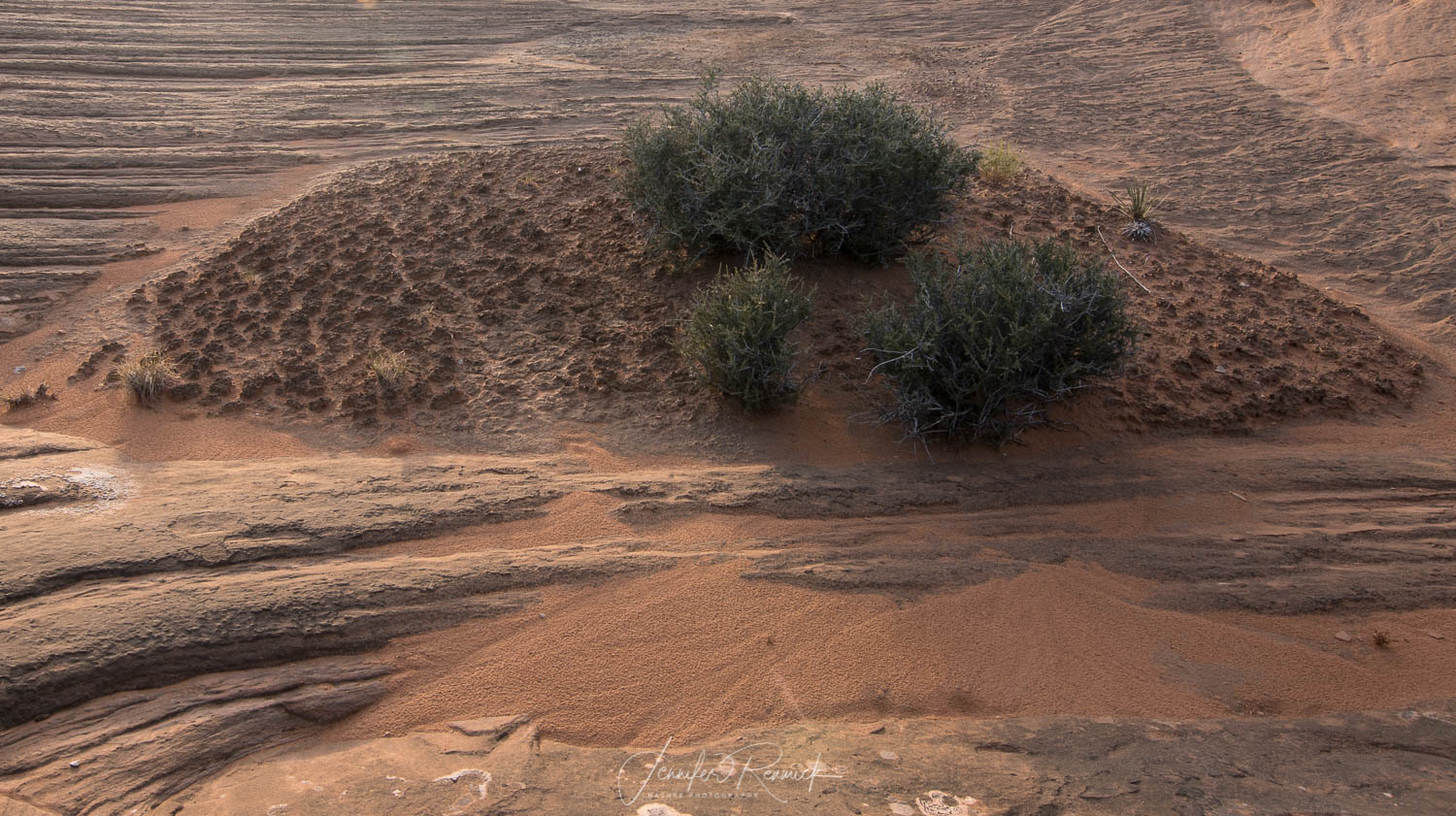 Many desert environments house cryptobiotic soils. These delicate soils take hundreds of years to grow, and one step or tripod hole can cause damage that will equally takes as long to heal.