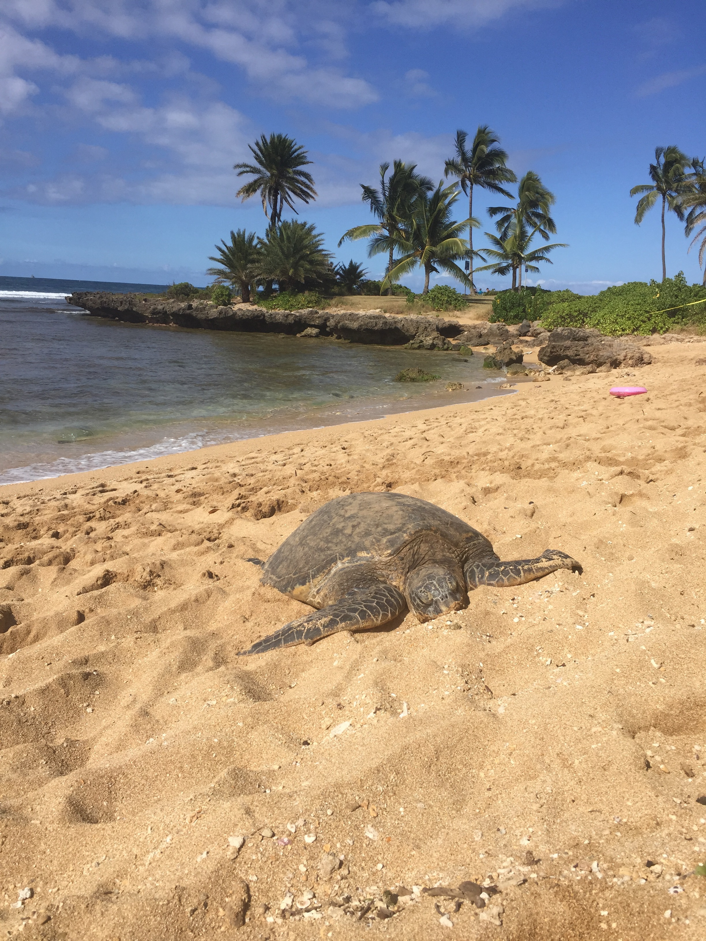 Relaxing on Turtle beach