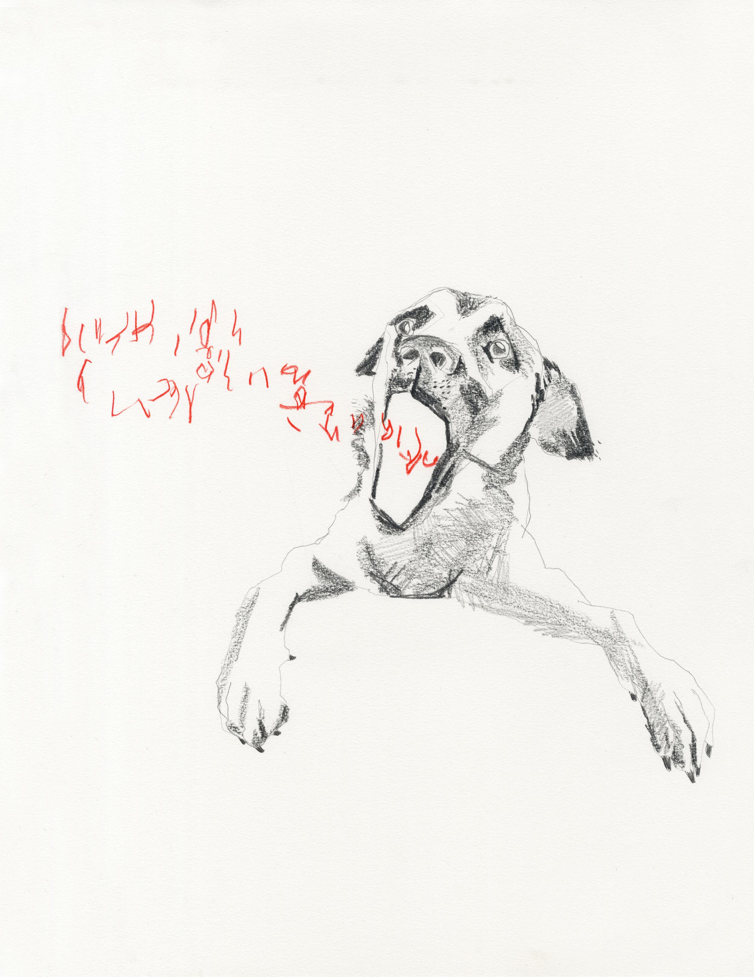 Mad Dog Tongues, 2019