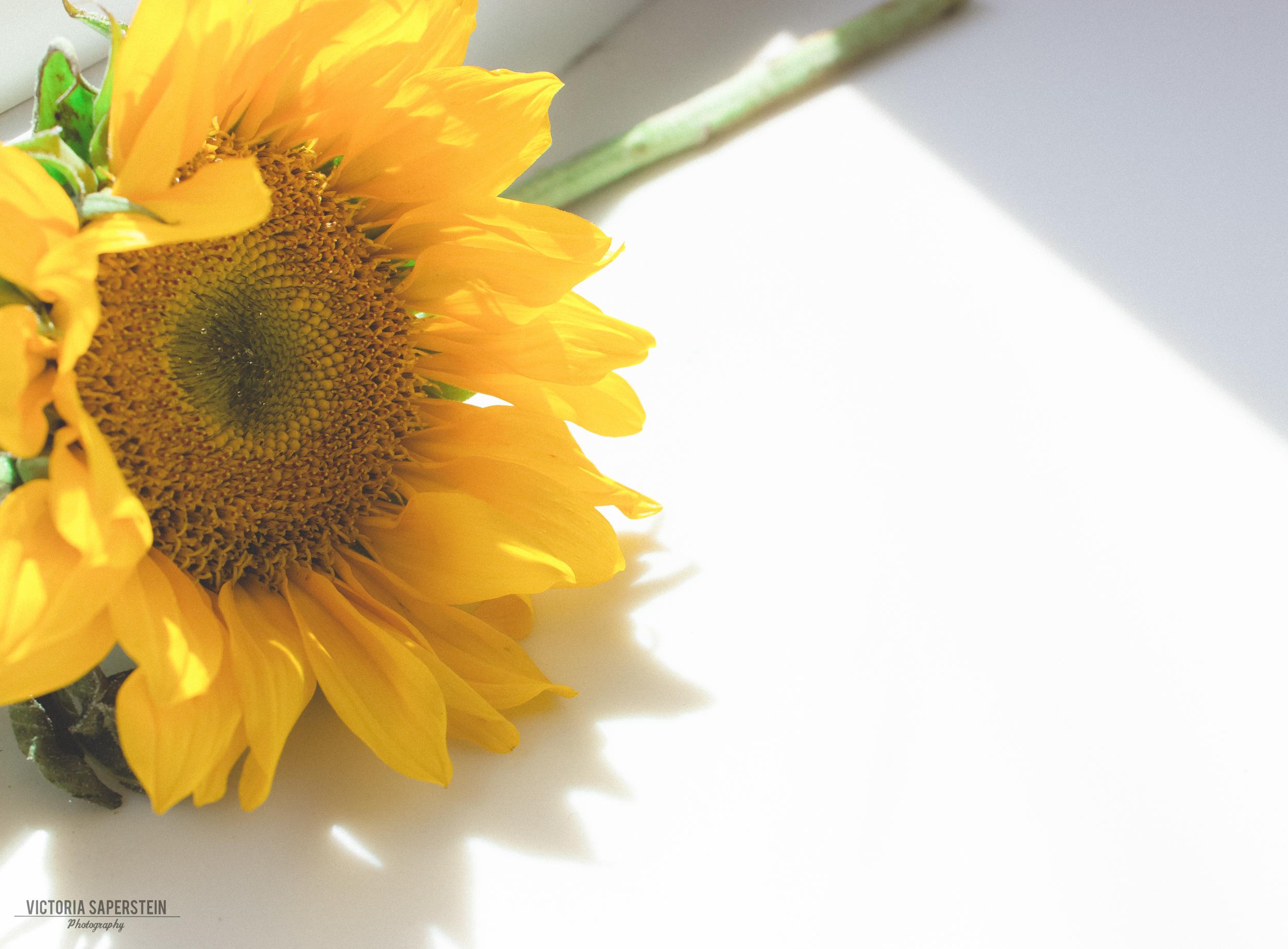 Flower still life 2.jpg