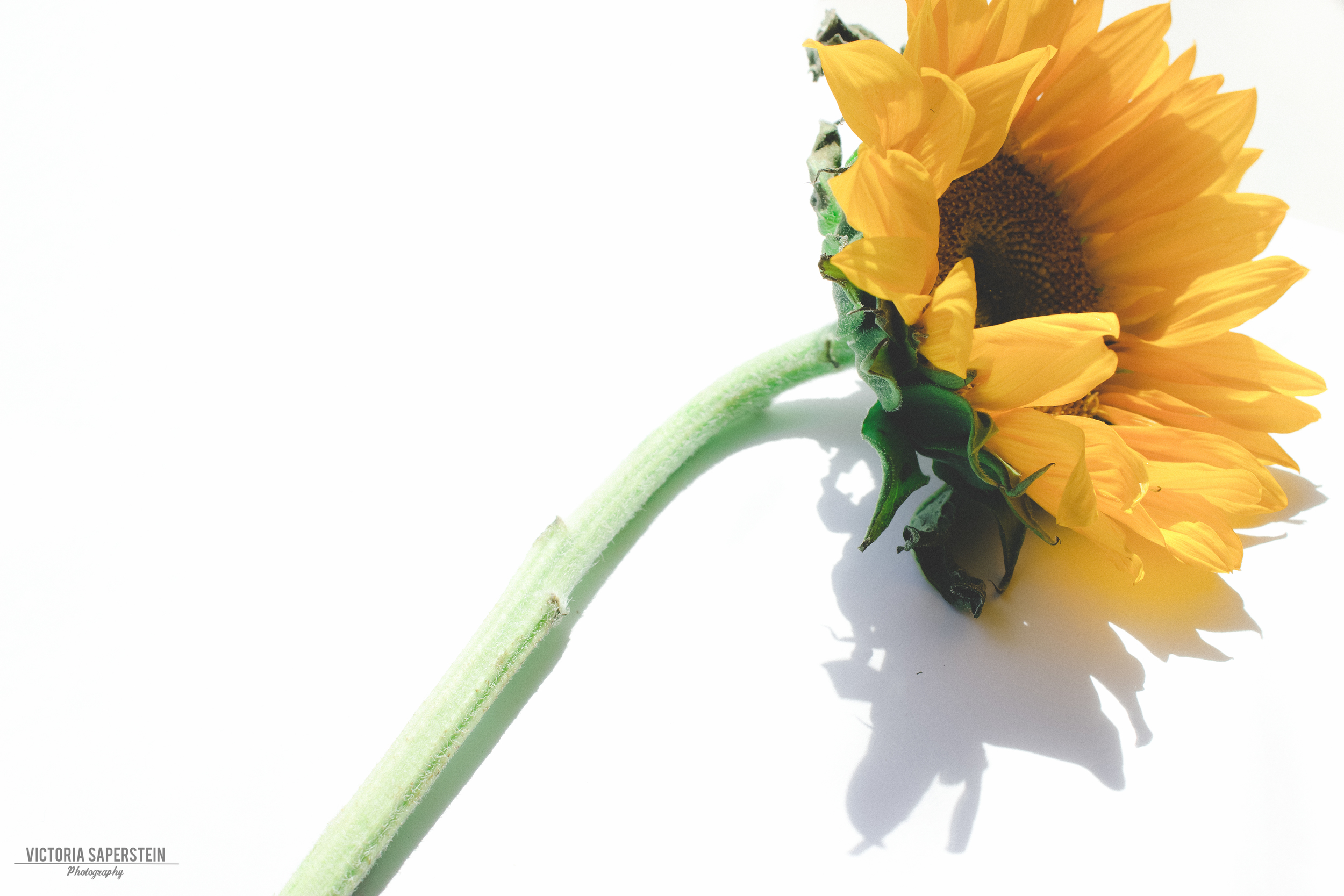 Flower still life 5 copy.jpg