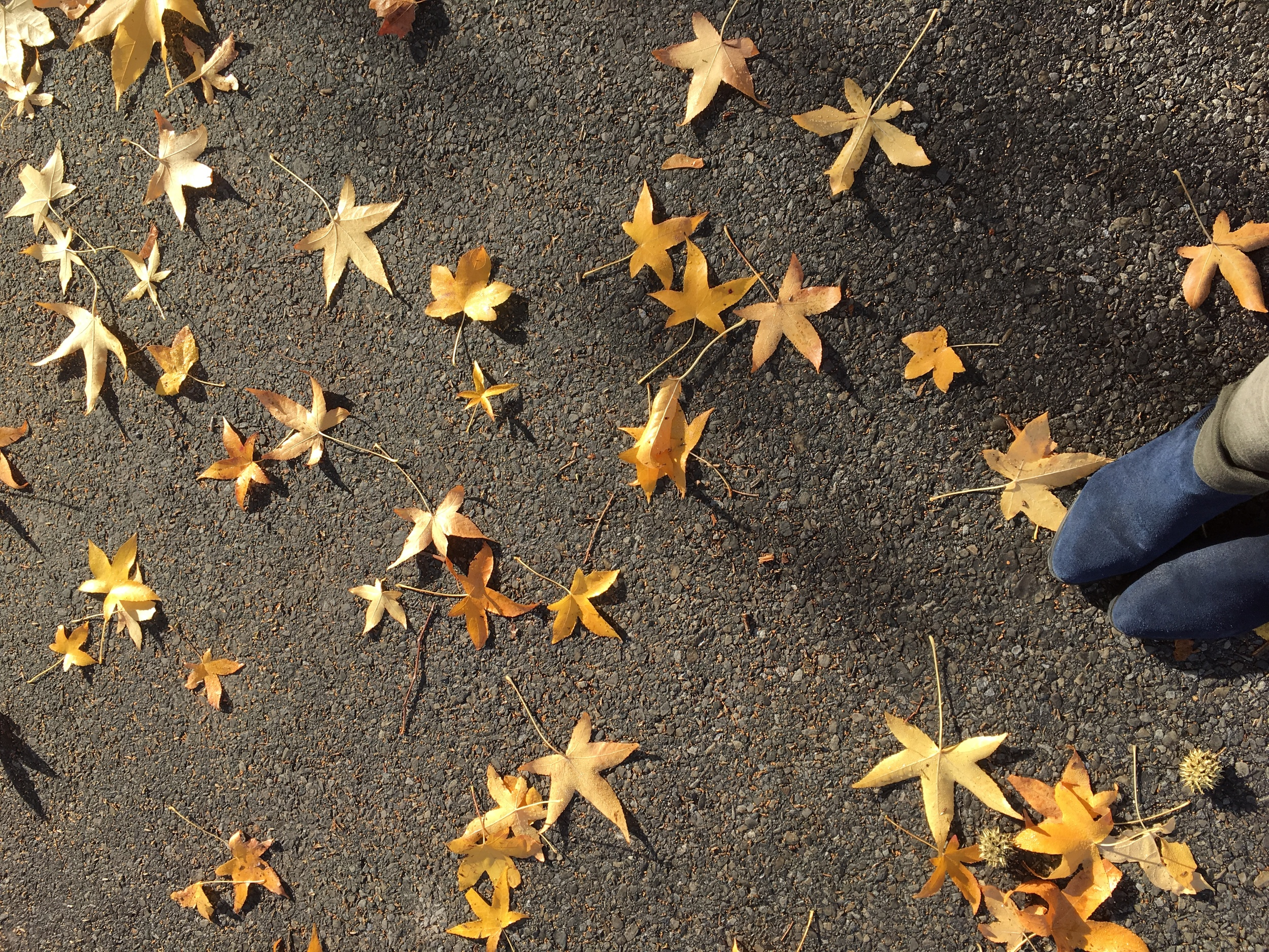 i fell in love with these leaves today because i am now the sort of person who falls in love with leaves.