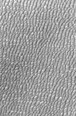 Gypsum sand dunes in the Olympia Undae region on Mars as captured by Mars Odyssey