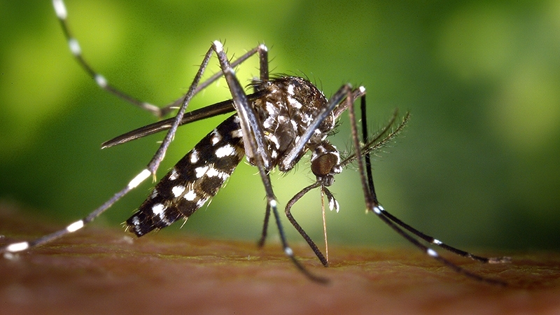 mosquito itchy.jpg