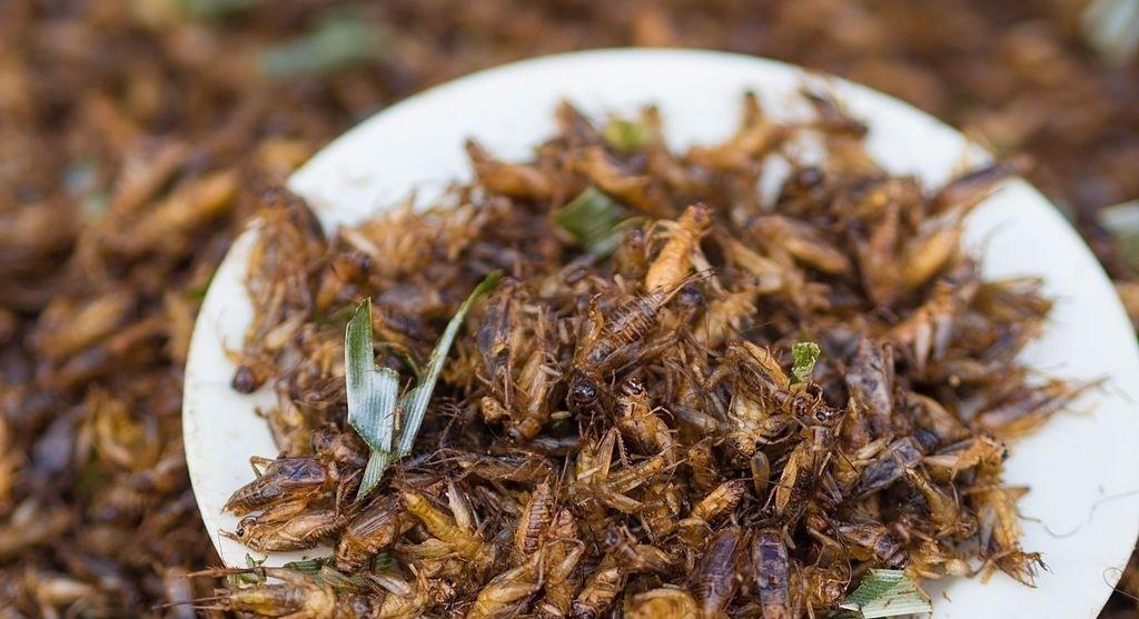 crickets%2Bfor%2Bfood