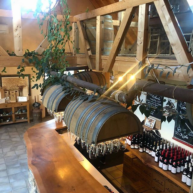"""So, for 𝐚𝐠𝐞𝐬 I've heard people talk about this great place in the Barossa that I just had to visit, called """"Sharky's""""..🦈🦈🦈 and I was always thinking to myself, what a name for a winery!   Finally it dawned on me 🤦♀️🤷♀️ -  the place everyone was talking about was Tscharke's. (I just didn't realise it was pronounced Sharky's!). Blonde moment! 😄  I checked it out on my recent Barossa visit, and loved it - very quaffable, great quality🍷🍷 and very wallet-friendly. 💰Must try was the off dry Sparkling, I think it was a Gewürztraminer - perfect to accompany spicy Asian dishes.   What made it really special to me: it reminded me of home, Germany, which is where hubby and wife team Damien (sixth generation) and Eva (first generation), are from as well. 🇩🇪  I was told they even imported the entire timber frame of the house 🏡 (a very traditional building style in Southern Germany) as well as the windows from there (Real """"Kippfenster""""! Don't ask why, every German silently gets excited about Kippfenster - it's a thing. 😂)  Well, they've succeeded, I felt right at home and will be sure to come back for more vino and that homely feel. Thanks for having me, Team Tscharke! ❤️   Ps: how cool are those barrel glass holders?? 😍👌 @tscharkewines #barossavalley #barossa #winery #cellardoor #winetasting #winetravels #cheers #barrels #winebarrelfurniture #winebarreldecor"""