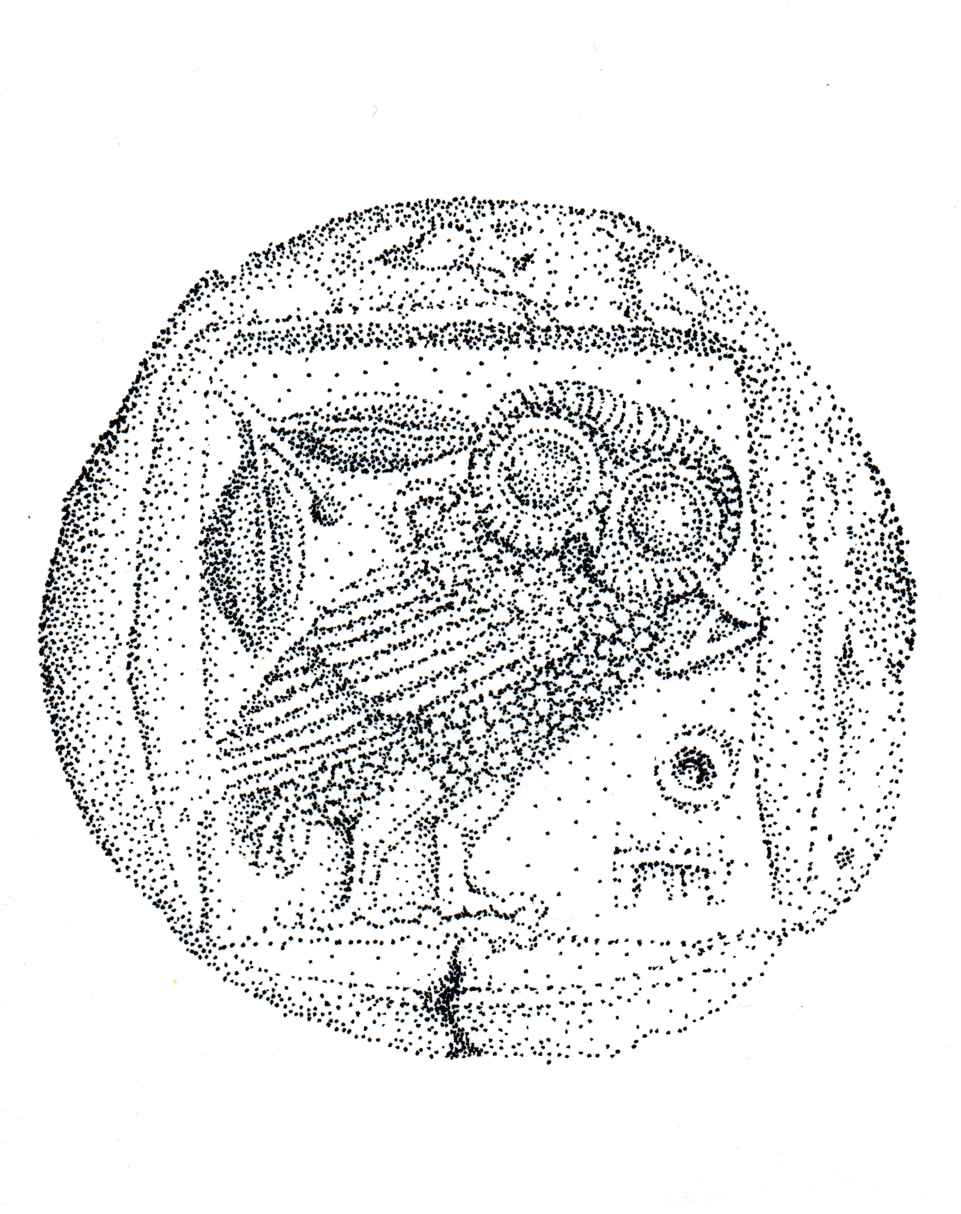 Owl edit crop.jpg