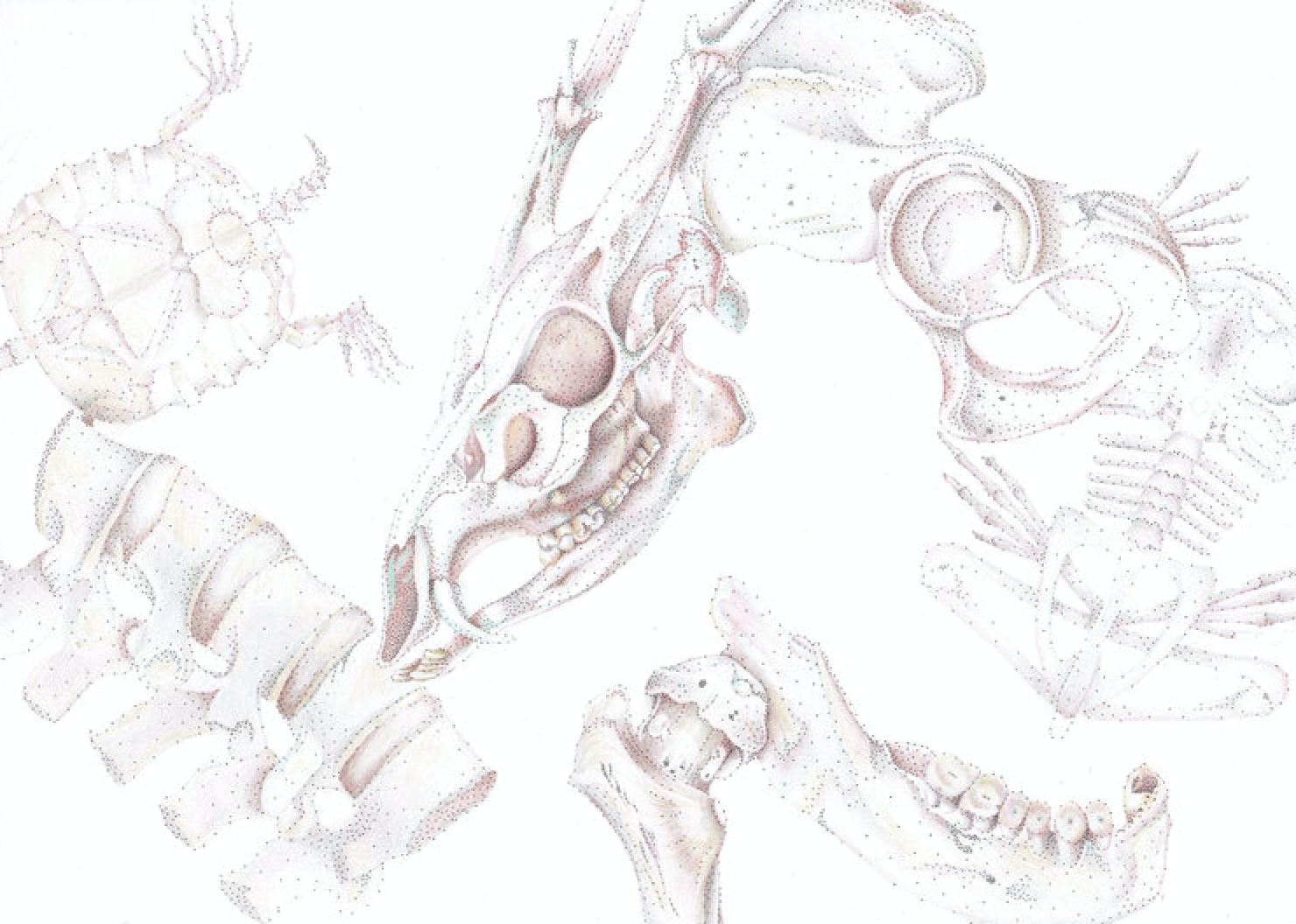 Overlapping bones.png