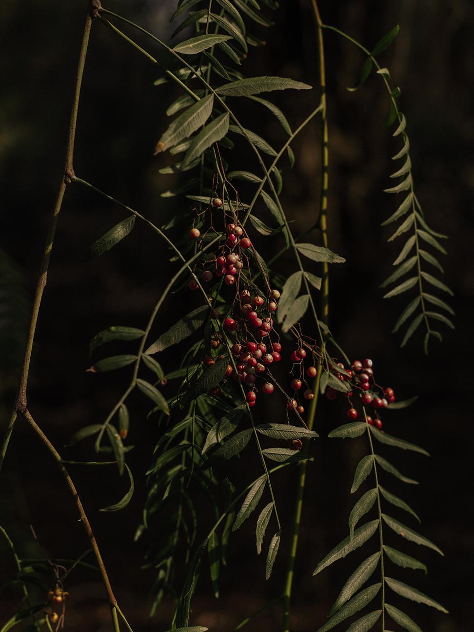 darkberry.jpg