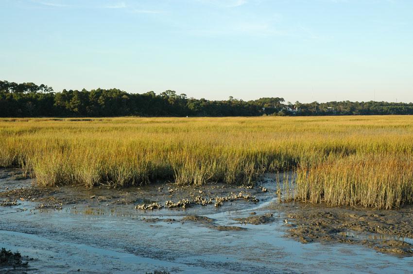 salt marsh mud