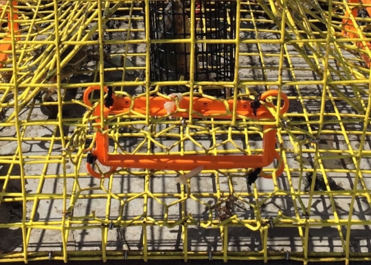 The orange plastic thing on this crab pot is a TED (Turtle Excluder Device). This was a TED design the scientists used in 2014.