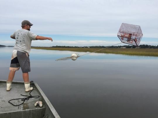 Deploying a blue crab trap