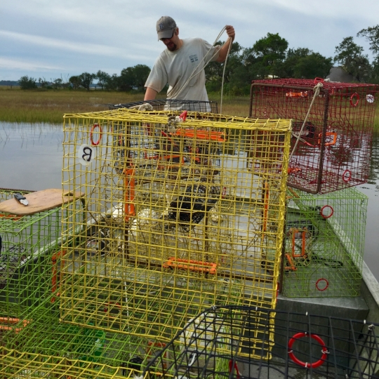 Crab trap research