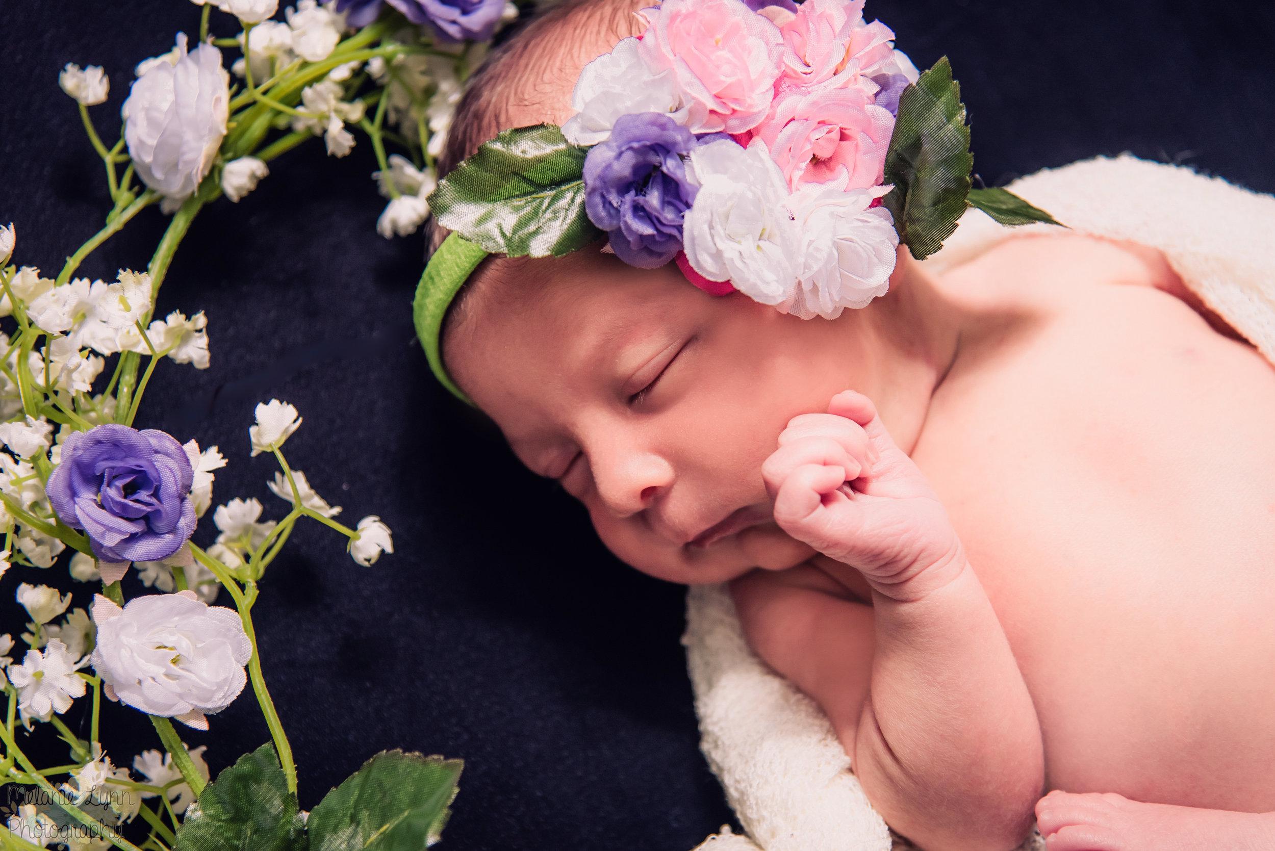 baby roses newborn.JPG