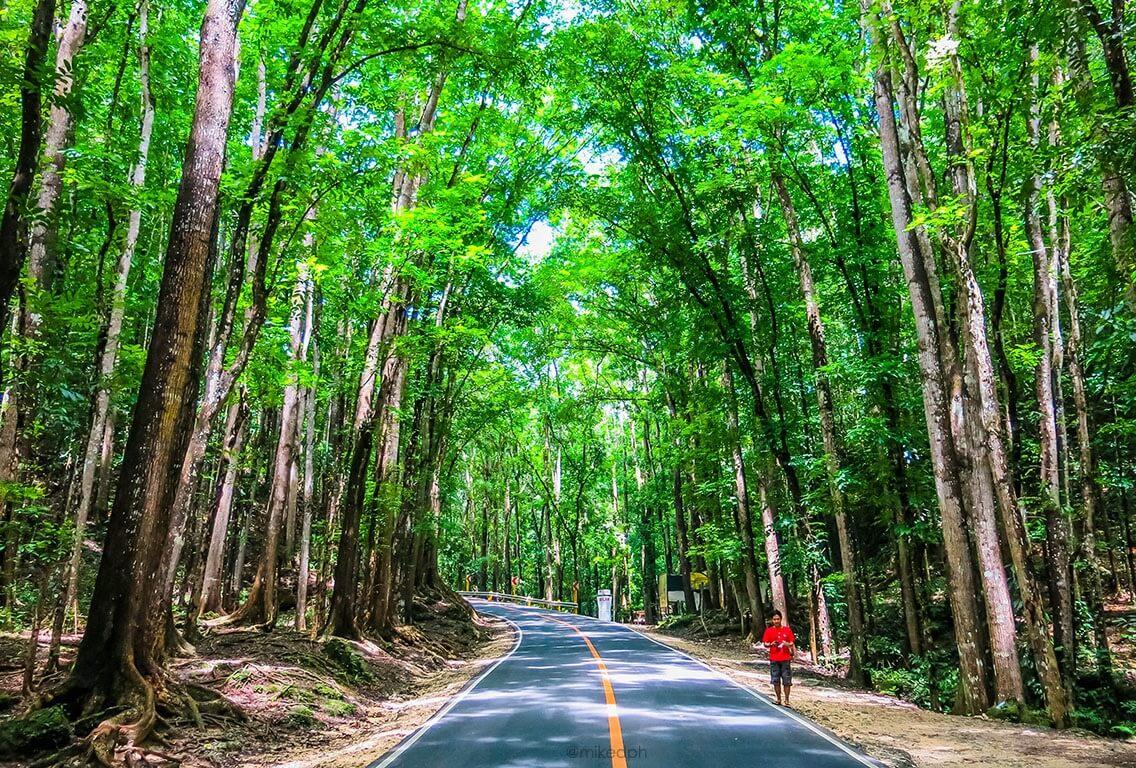 Man-made forest in Bilar