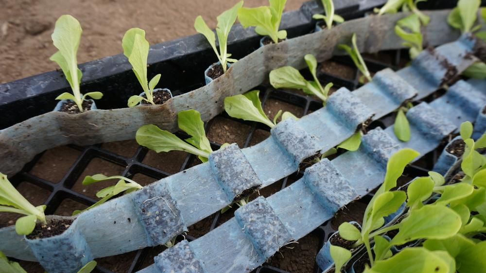 PlantTape.jpg
