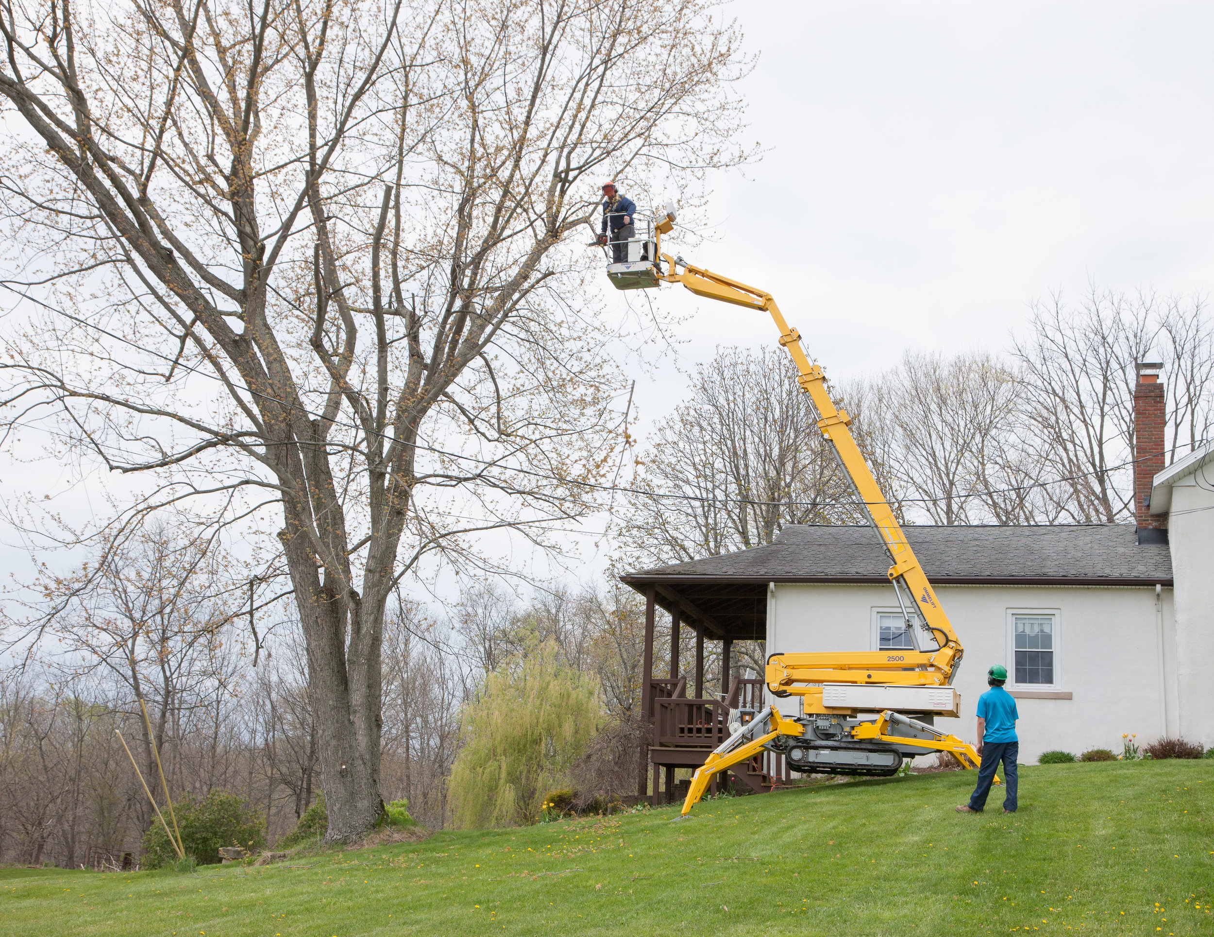 Tree removal in canton, wooster, orville, and dalton ohio.