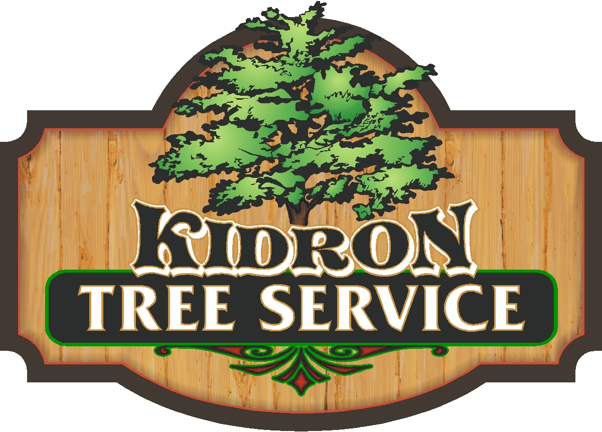 Tree care in Wooster, Ohio.