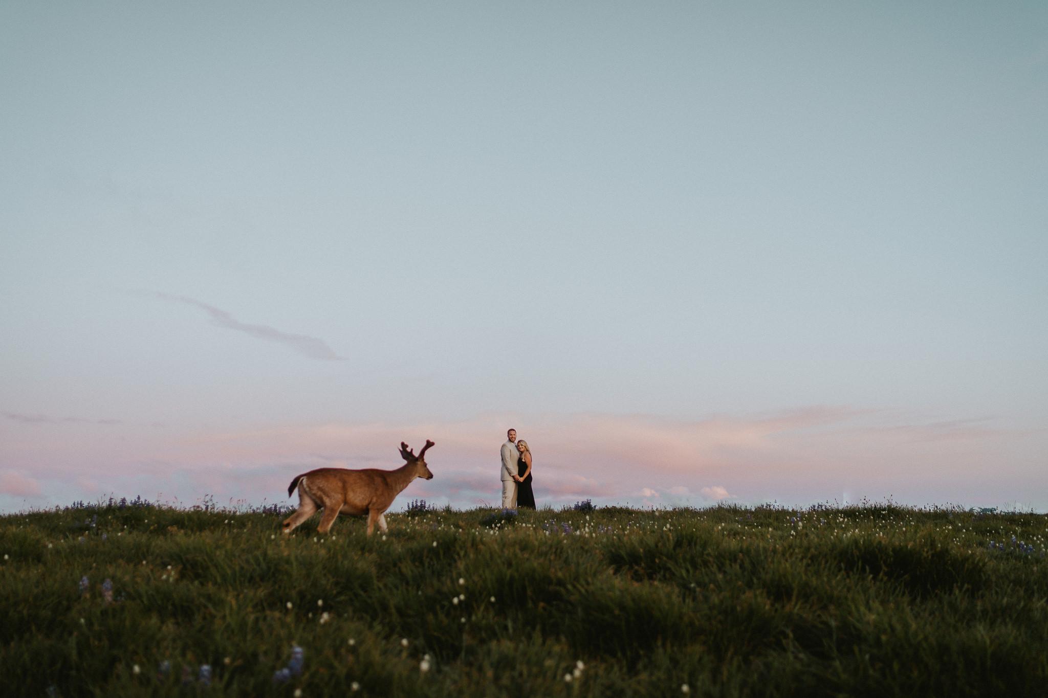 Deer-photobomb-Olympic-National-Park