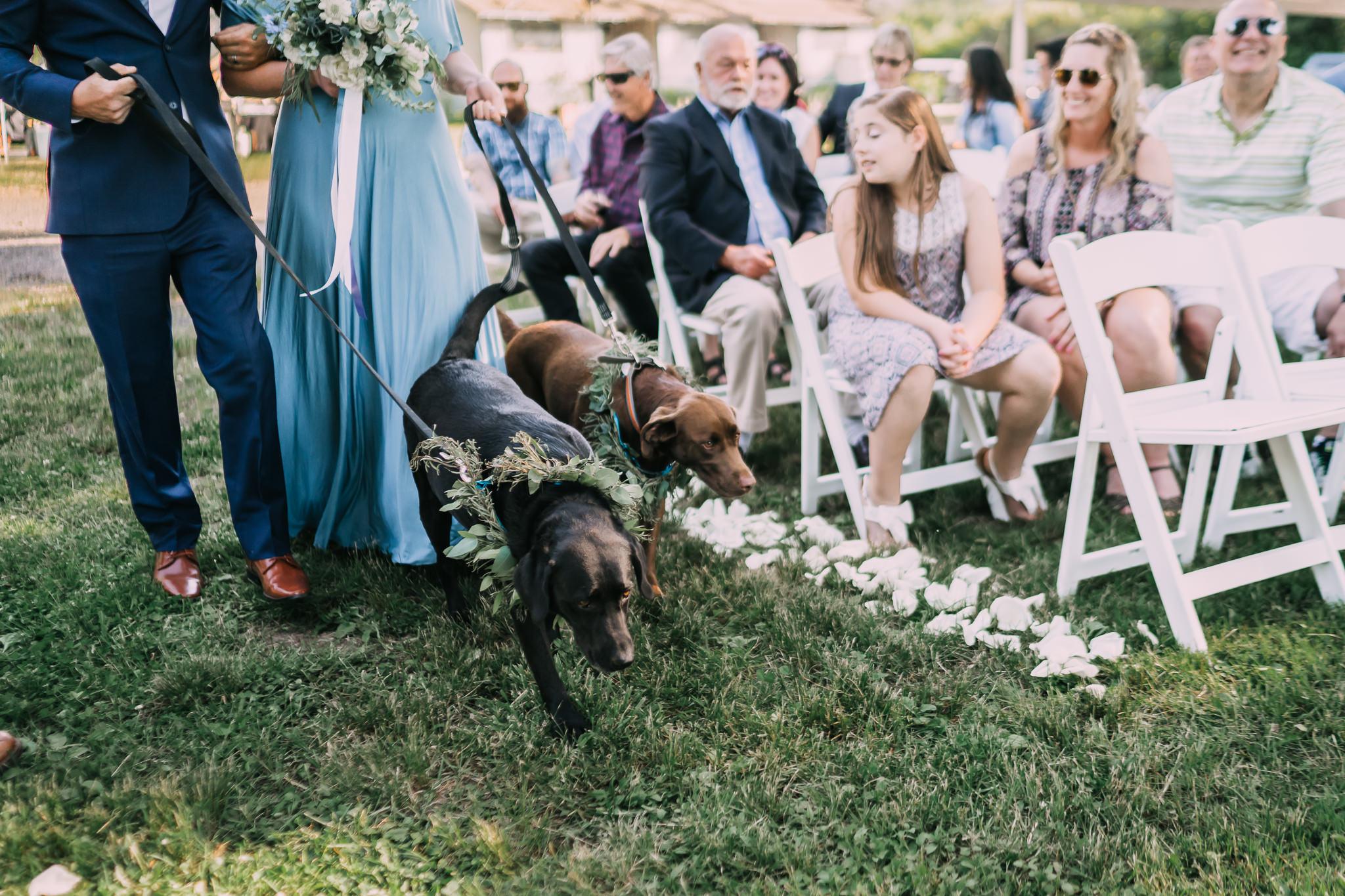 Bride groom dogs ring bearers Portland Oregon Backyard Wedding Ceremony