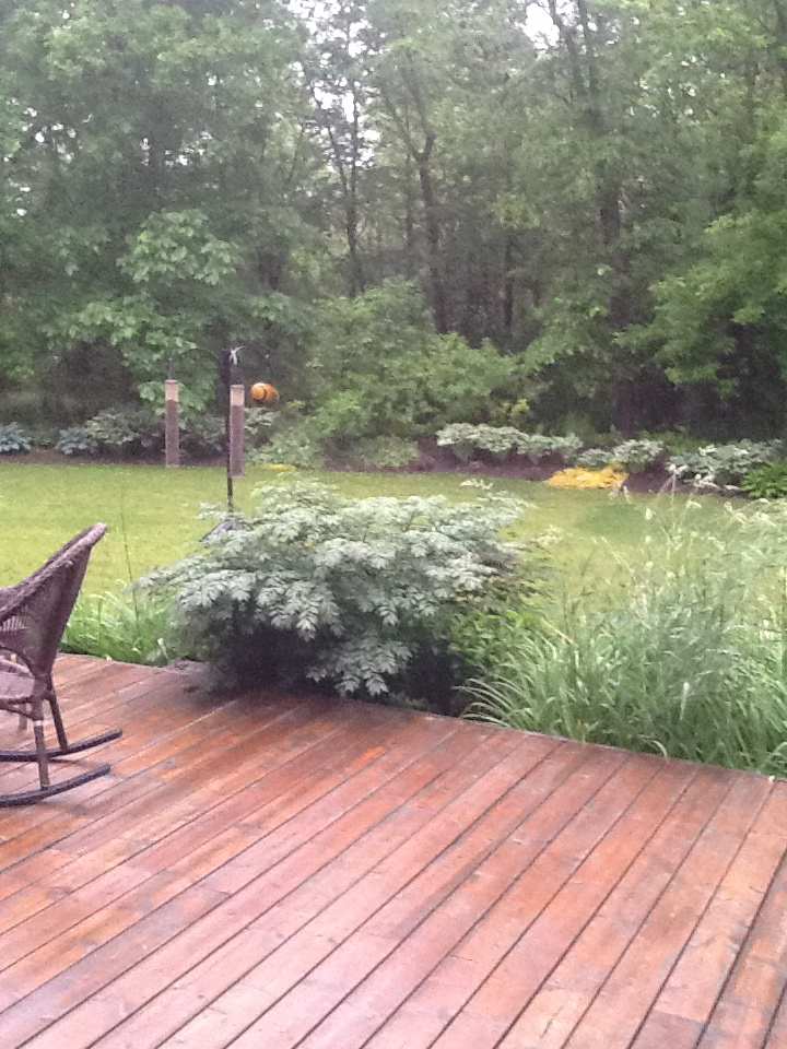 Back deck/woods view