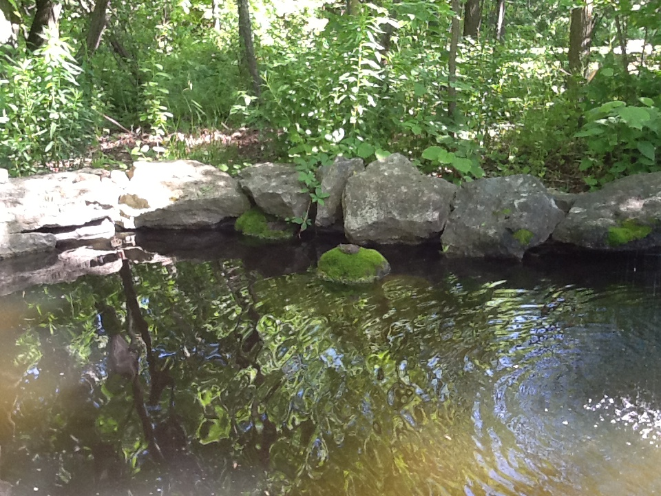 Pond at the edge of the woods