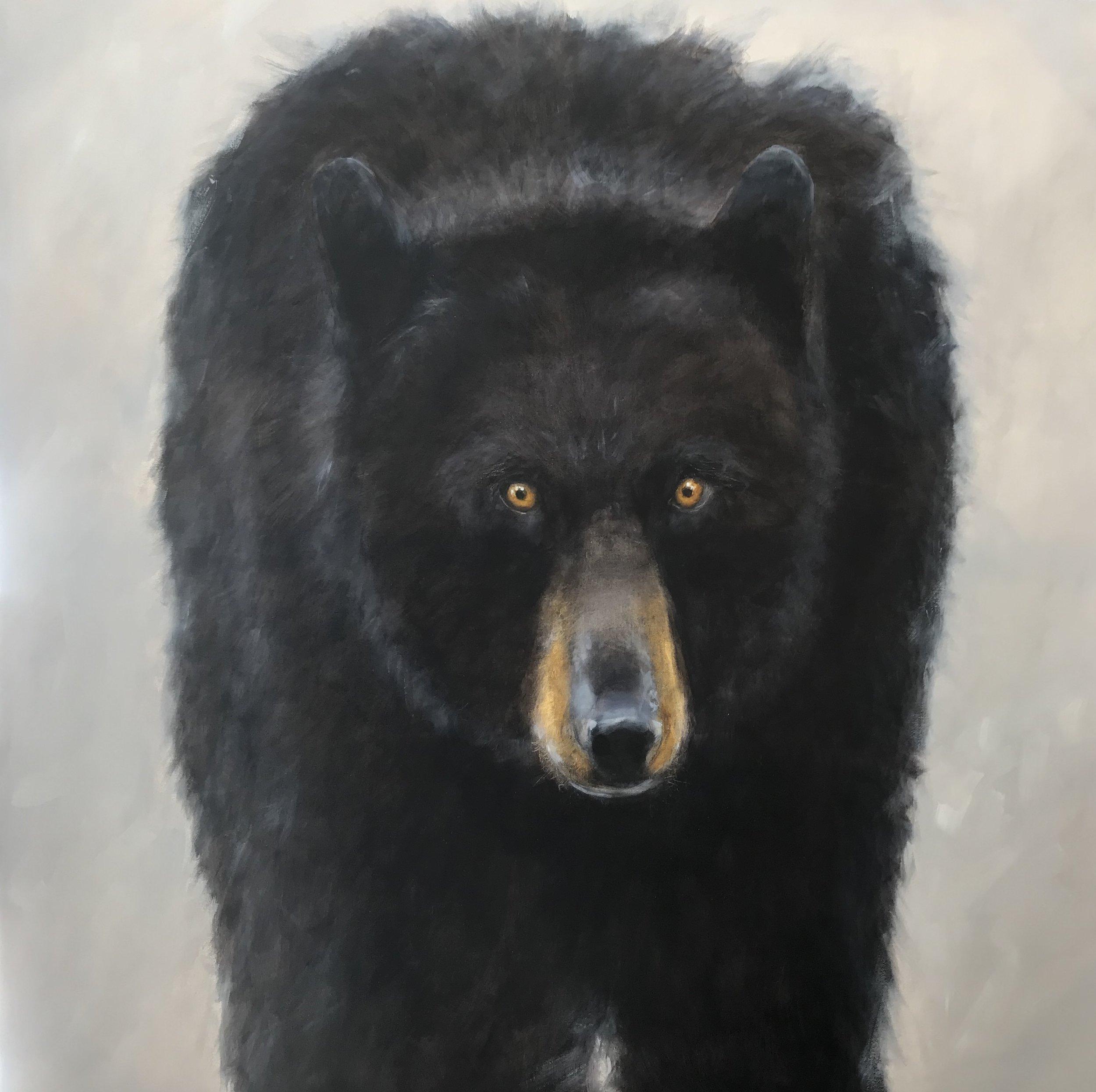Black Bear - Ursa 48 x 48 Sold