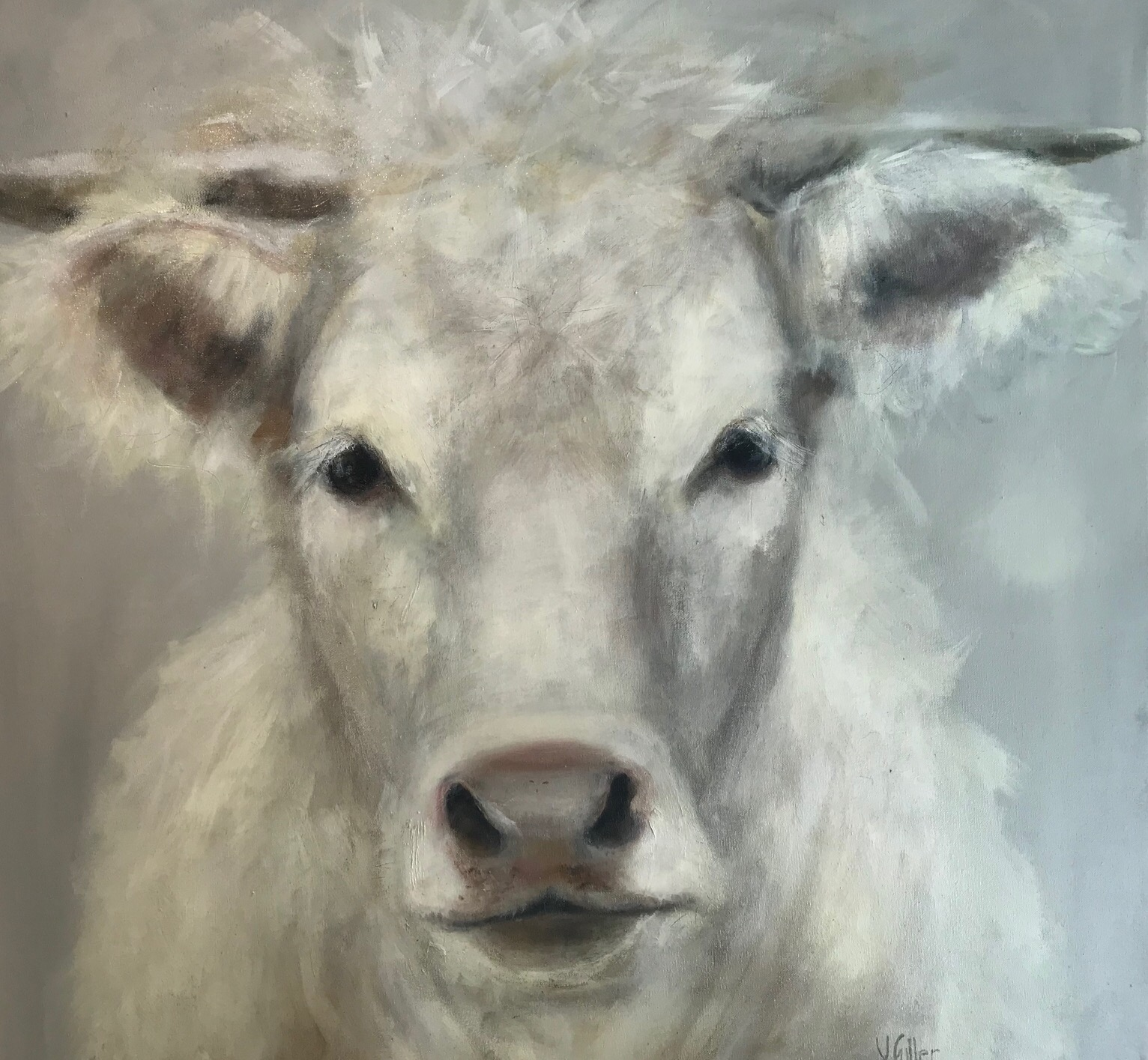 Cow from Orquevaux 36 x 36 Sold