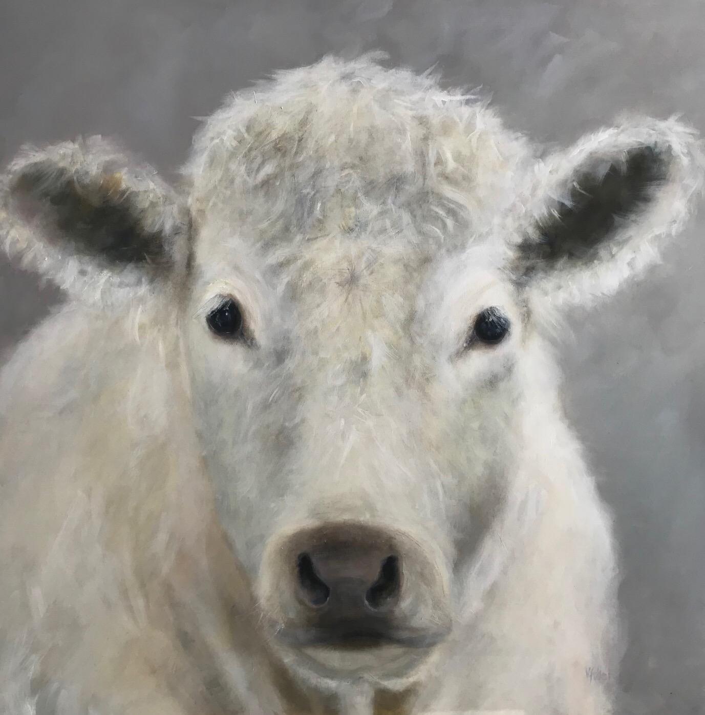 Charolais Calf 48 x 48 Sold