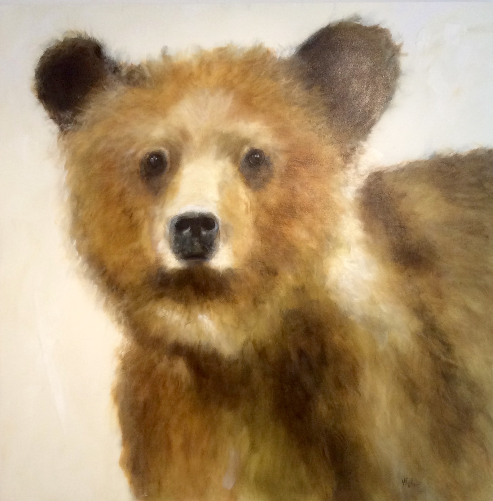 Young Grizzly 48 x 48 Sold