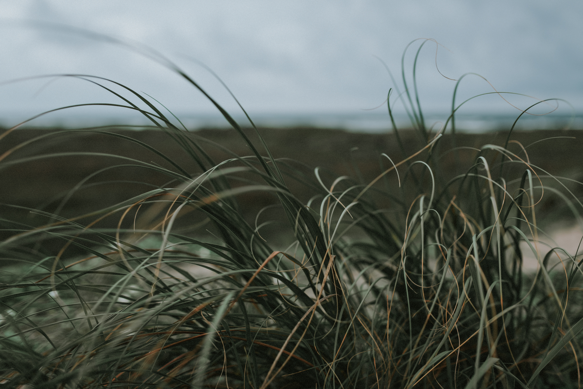 padre-island-motherhood-photographer-grass-blowing-in-the-wind
