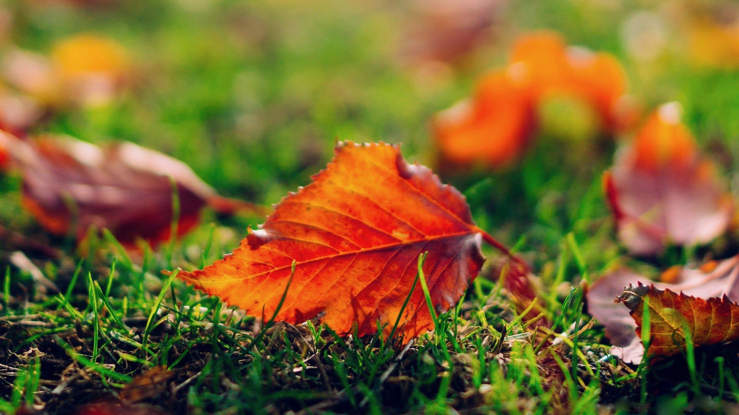 11 November Leaves2.jpg