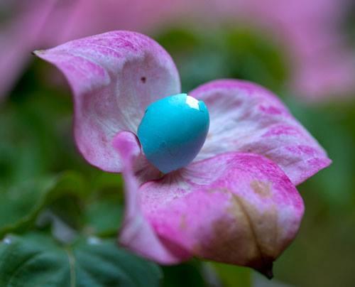 Sharon-Grainger-flower-egg.jpg