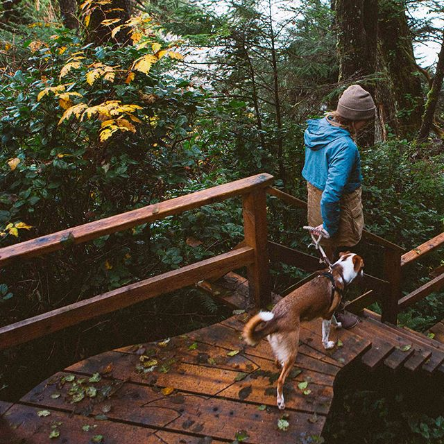 Follow the cedar plank road. 🌲