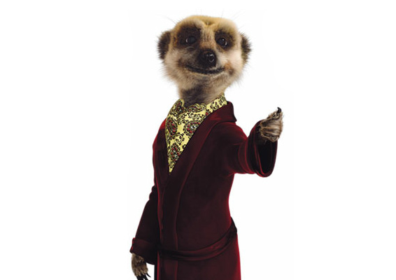 (Image: Aleksanr - Compare the Meerkat)