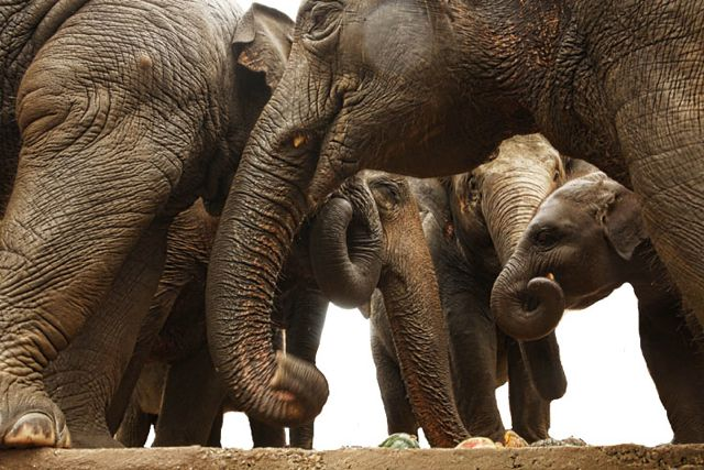 1 elephants 1.jpg