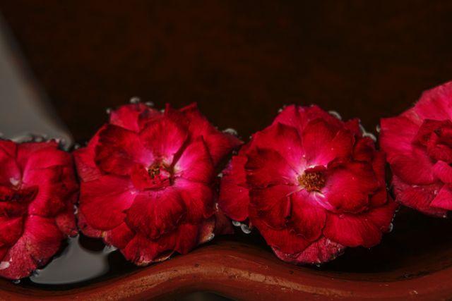 22 Flowers 1.jpg