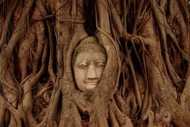 Buddha Head in Tree Roots.jpg