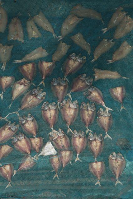 Filleted Fish.jpg